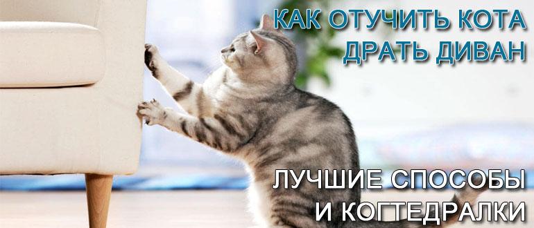 как-отучить-кота-драть-диван