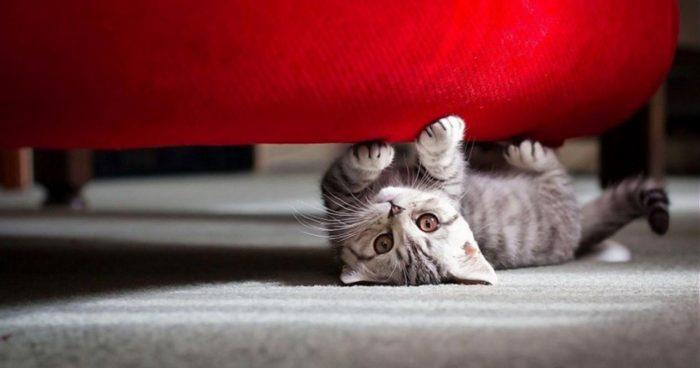 как отучить не драть диван