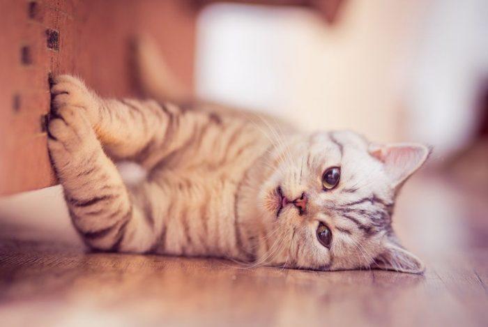 кот дерет диван когтеточка