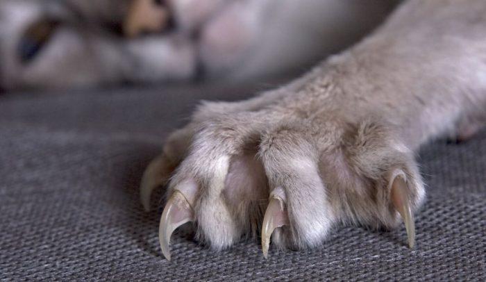 отучить кота драть диван